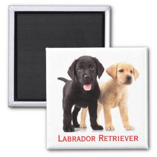 Svart gul hund för valp för Labrador Retriever Magnet