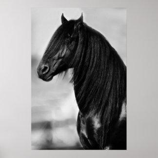 Svart hingsthäst för Friesian Posters