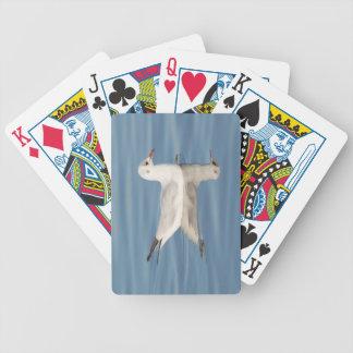 Svart-hövdad fiskmås spelkort