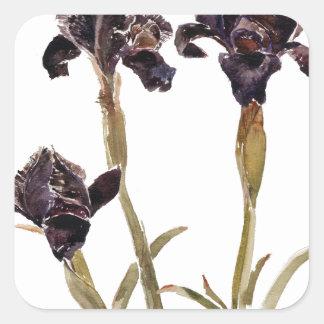 svart iris av Jordanien Fyrkantigt Klistermärke