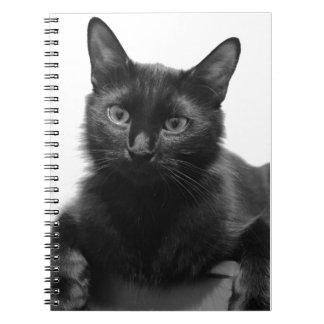 Svart katt anteckningsbok med spiral