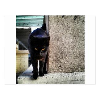 Svart katt för lycka till vykort