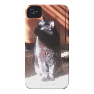 svart katt iPhone 4 cases