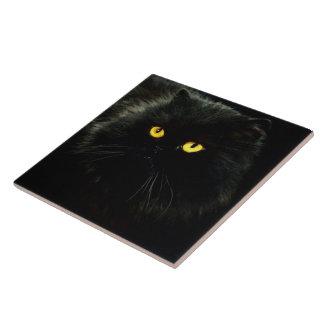 Svart katt stor kakelplatta