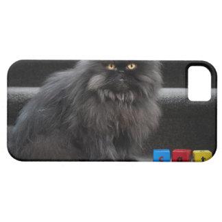 Svart kattsitta på trappor vid byggnadblock iPhone 5 Case-Mate fodral