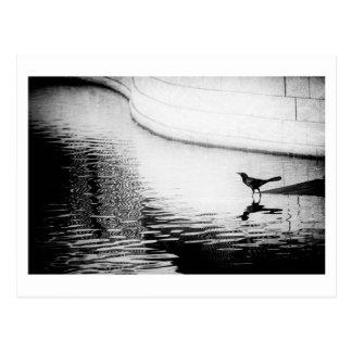 Svart kråka med reflexion på vatten - foto Postca Vykort