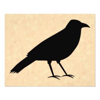 Svart kråkafågel på en Parchmentmodell Flygblad