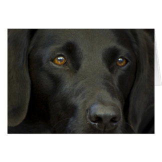 Svart Labrador hund Hälsningskort