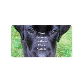 Svart Labrador hund på gräs Adressetikett