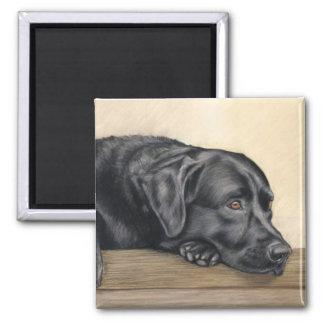 Svart Labrador porträtt Magnet