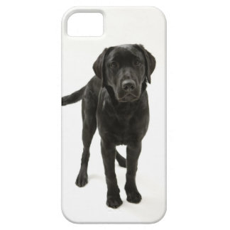 Svart labrador retriever iPhone 5 Case-Mate skydd