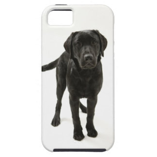 Svart labrador retriever iPhone 5 skydd