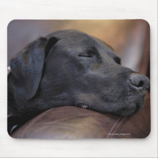 Svart labrador sovande på soffan, närbild musmatta
