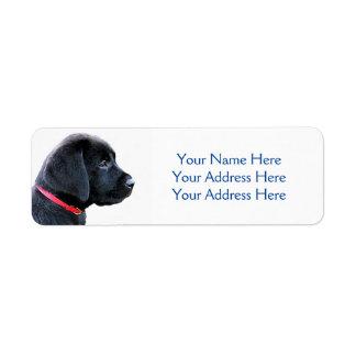 Svart Labrador valp Returadress Etikett