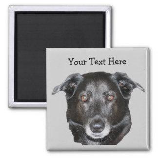 Svart magnet för hund för Labrador Retriever