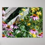 Svart och gul fjäril och daisy poster