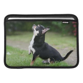 Svart och kräm- Chihuahua MacBook Air Sleeve