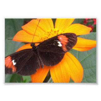 svart och orange fototryck
