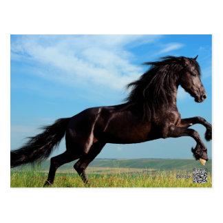 svart- och vildhingst som fostrar hästen vykort