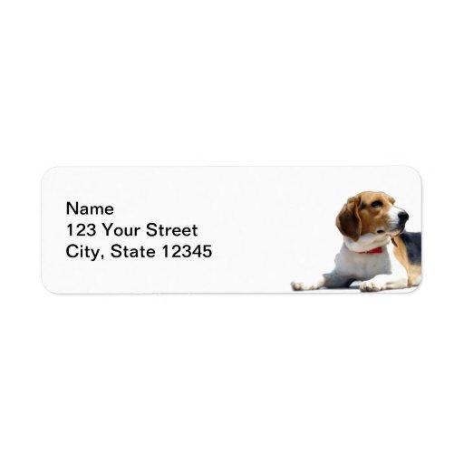 Svart returadress för brunt- och vitBeaglehund Returadress Etikett
