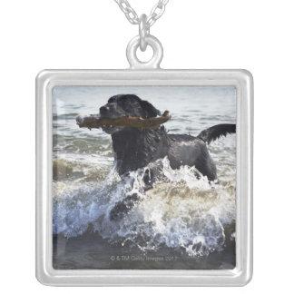 Svart spring för Labrador retriever till och med Silverpläterat Halsband