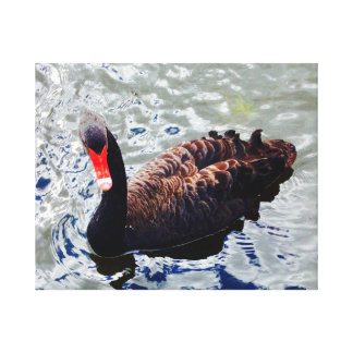 Svart svan på sorlblåttvatten canvastryck