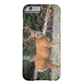 Svart-tailed hjort, bock som äter vildblommar, barely there iPhone 6 fodral