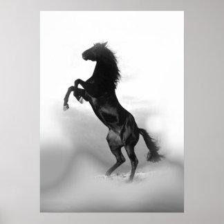 Svart vit som fostrar hästen poster