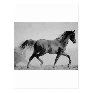 Svart & vit som går hästen vykort