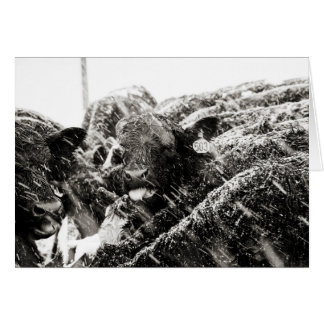 Svart- & vitko som fångar snöflingorhälsning hälsningskort