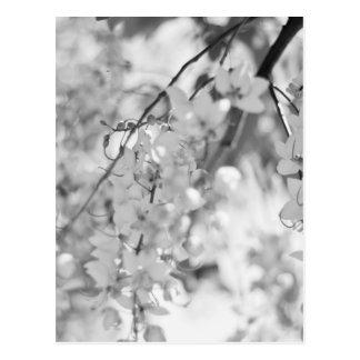 Svartvit blommargren vykort