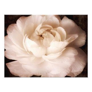 Svartvit blommigt för RanunculusblommaSepia Fototryck
