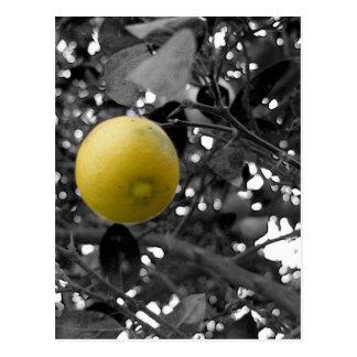 Svartvit citron vykort