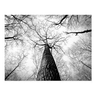 Svartvit fotografi för höstträdskog vykort