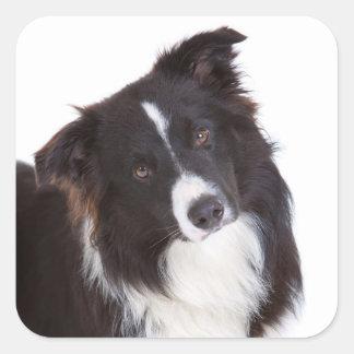 Svartvit hund för gränsCollievalp Fyrkantigt Klistermärke