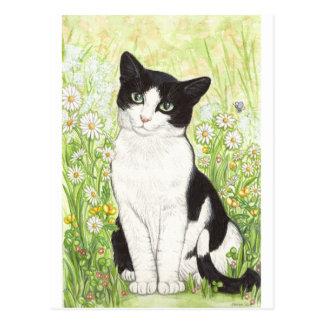 Svartvit katt med daisy vykort