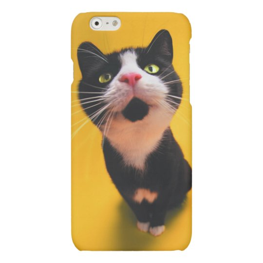 Svartvit katt-smoking katt-husdjur