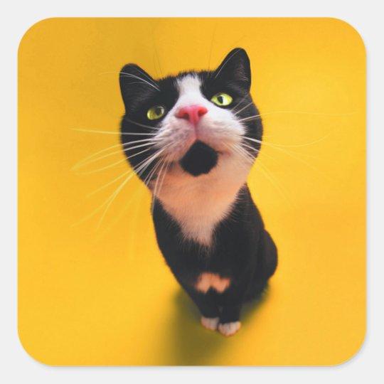 Svartvit katt-smoking katt-husdjur fyrkantigt klistermärke