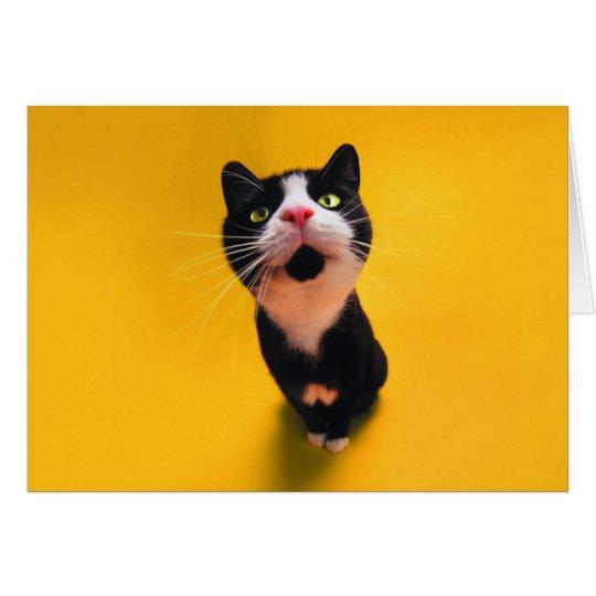Svartvit katt-smoking katt-husdjur hälsningskort