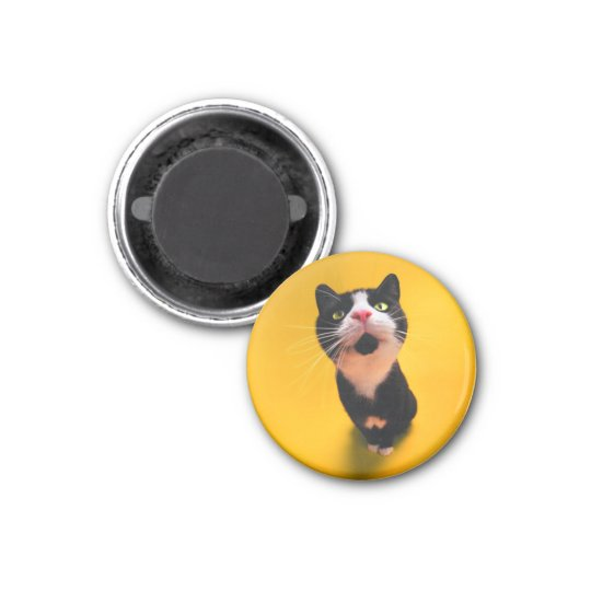 Svartvit katt-smoking katt-husdjur magnet