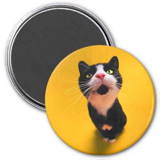 Svartvit katt-smoking katt-husdjur magnet rund 7.6 cm