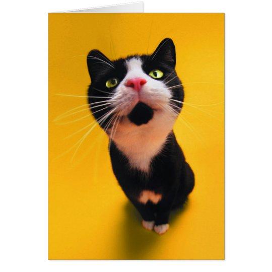 Svartvit katt-smoking katt-husdjur OBS kort