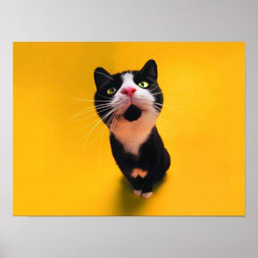Svartvit katt-smoking katt-husdjur poster