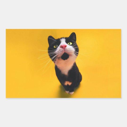 Svartvit katt-smoking katt-husdjur rektangulärt klistermärke