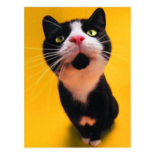 Svartvit katt-smoking katt-husdjur vykort