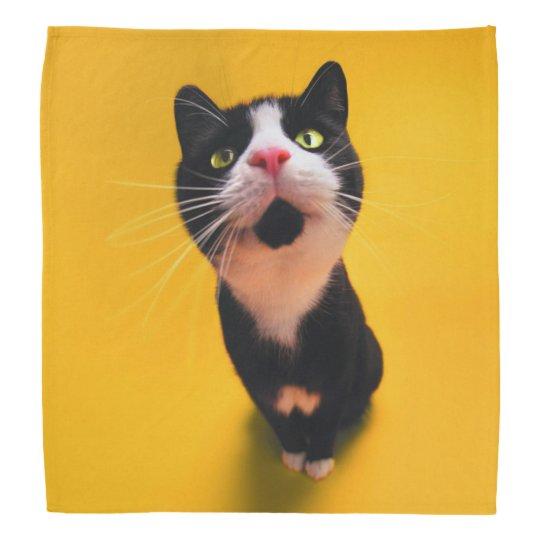 Svartvit katt-smoking katt-husdjur wrap för huvud