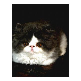 Svartvit kattunge brevhuvud