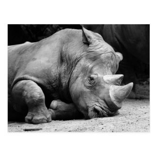 Svartvit noshörning vykort