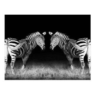 Svartvit spegelförsedd zebror vykort
