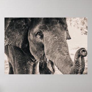 Svartvita afrikadjur för elefant poster